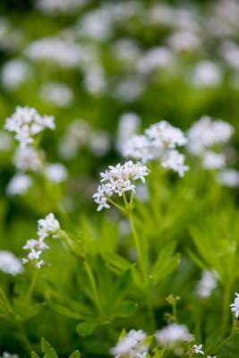 wpid18415-Family-Garden-in-May-GHST089-nicola-stocken.jpg