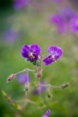wpid18419-Family-Garden-in-May-GHST092-nicola-stocken.jpg