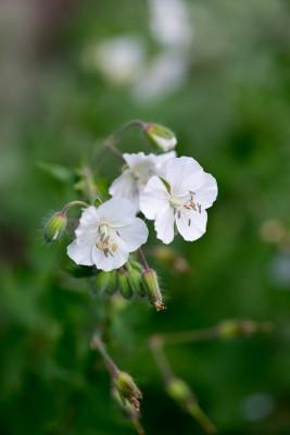 wpid18421-Family-Garden-in-May-GHST093-nicola-stocken.jpg