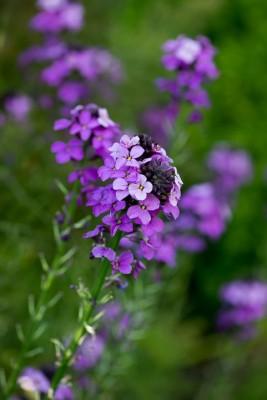 wpid18425-Family-Garden-in-May-GHST096-nicola-stocken.jpg