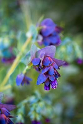 wpid18427-Family-Garden-in-May-GHST097-nicola-stocken.jpg
