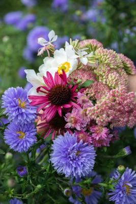 wpid18446-Garden-Posie-for-September-QPOS399-nicola-stocken.jpg