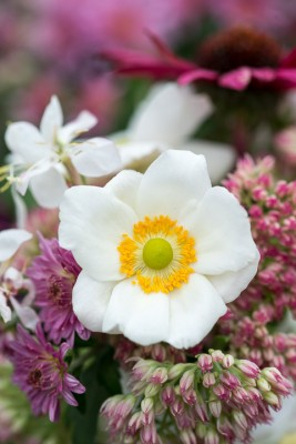 wpid18468-Garden-Posie-for-September-QPOS419-nicola-stocken.jpg