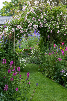 Thumbnail image for Midsummer Cottage Garden