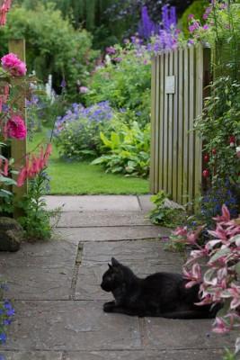 wpid18666-Midsummer-Cottage-Garden-GHGH036-nicola-stocken.jpg