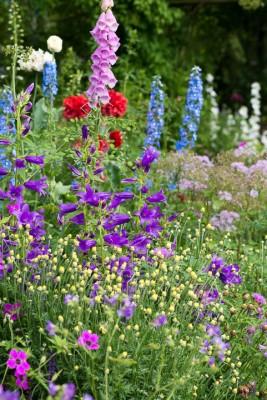 wpid18674-Midsummer-Cottage-Garden-GHGH048-nicola-stocken.jpg