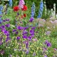 wpid18674-Midsummer-Cottage-Garden-GHGH048-nicola-stocken.jpg thumbnail