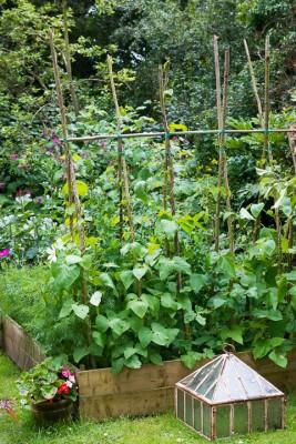 wpid18694-Midsummer-Cottage-Garden-GHGH077-nicola-stocken.jpg