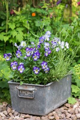 wpid18700-Midsummer-Cottage-Garden-GHGH082-nicola-stocken.jpg