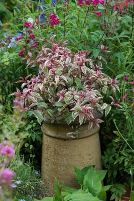 wpid18702-Midsummer-Cottage-Garden-GHGH085-nicola-stocken.jpg