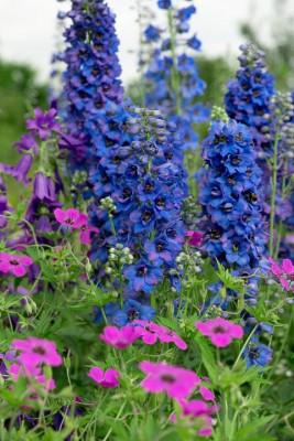 wpid18706-Midsummer-Cottage-Garden-GHGH090-nicola-stocken.jpg