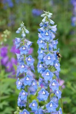 wpid18708-Midsummer-Cottage-Garden-GHGH091-nicola-stocken.jpg