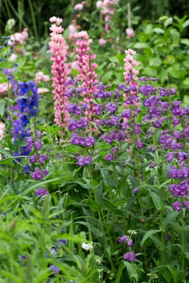 wpid18710-Midsummer-Cottage-Garden-GHGH093-nicola-stocken.jpg