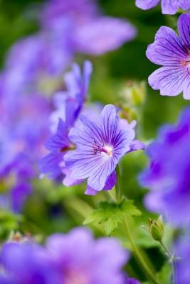 wpid18716-Midsummer-Cottage-Garden-GHGH098-nicola-stocken.jpg