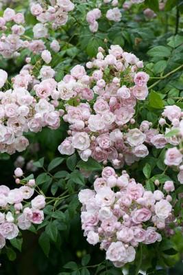 wpid18724-Midsummer-Cottage-Garden-GHGH106-nicola-stocken.jpg