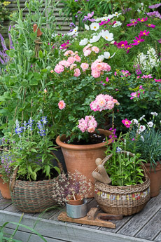 Thumbnail image for A Cottage Garden in Pots