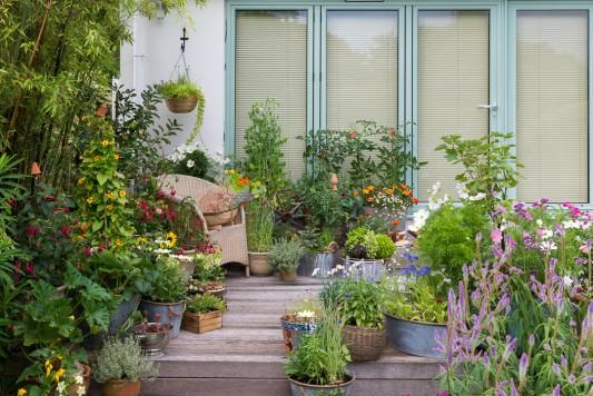 wpid19208-A-Cottage-Garden-in-Pots-DECK003-nicola-stocken.jpg