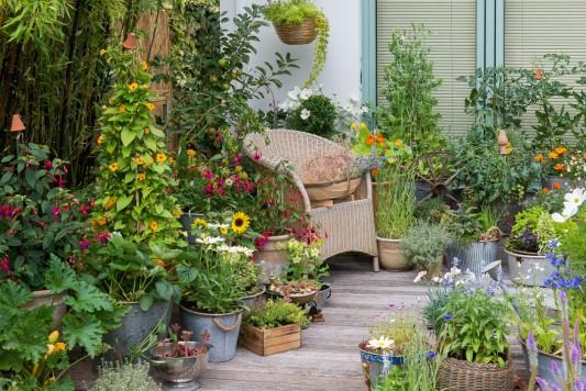 wpid19210-A-Cottage-Garden-in-Pots-DECK005-nicola-stocken.jpg