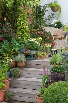 wpid19212-A-Cottage-Garden-in-Pots-DECK008-nicola-stocken.jpg