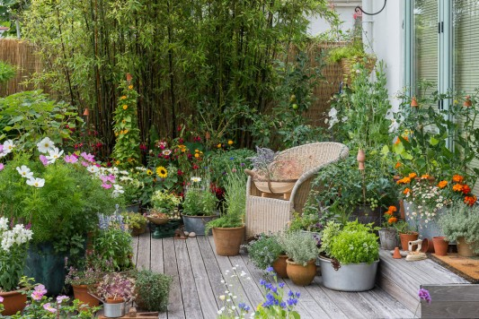 wpid19214-A-Cottage-Garden-in-Pots-DECK011-nicola-stocken.jpg