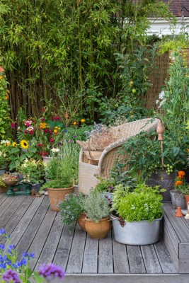 wpid19216-A-Cottage-Garden-in-Pots-DECK014-nicola-stocken.jpg
