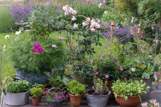wpid19218-A-Cottage-Garden-in-Pots-DECK018-nicola-stocken.jpg