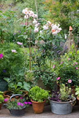 wpid19220-A-Cottage-Garden-in-Pots-DECK021-nicola-stocken.jpg