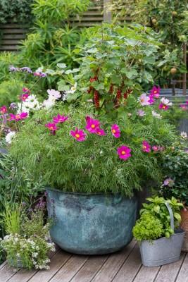 wpid19226-A-Cottage-Garden-in-Pots-DECK029-nicola-stocken.jpg