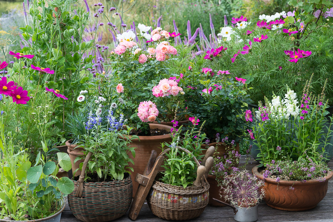 A cottage garden in pots for Small garden ideas with pots