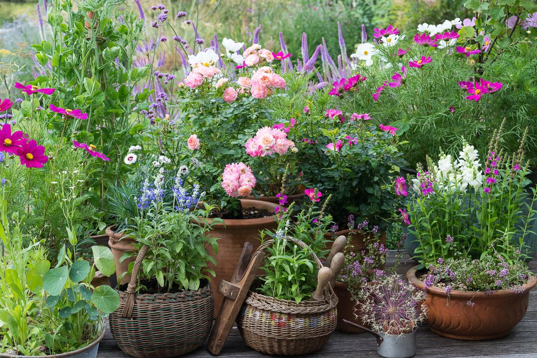 A Cottage Garden In Pots