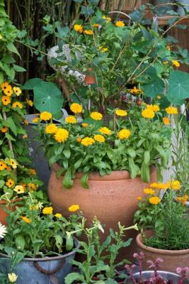 wpid19242-A-Cottage-Garden-in-Pots-DECK053-nicola-stocken.jpg
