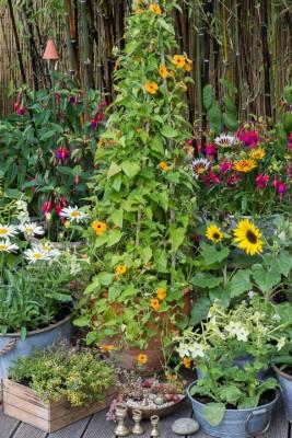 wpid19248-A-Cottage-Garden-in-Pots-DECK057-nicola-stocken.jpg