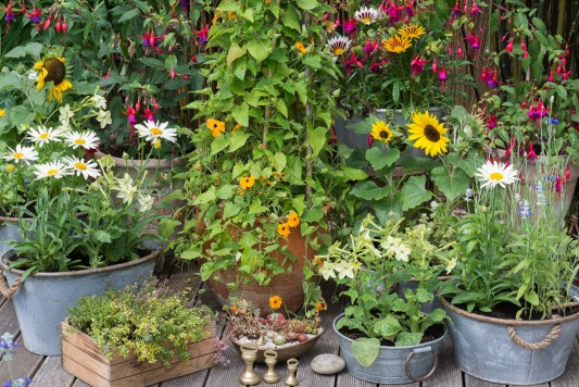 wpid19250-A-Cottage-Garden-in-Pots-DECK059-nicola-stocken.jpg