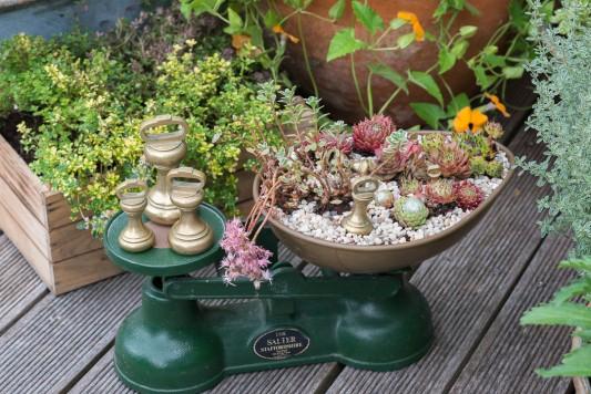wpid19252-A-Cottage-Garden-in-Pots-DECK060-nicola-stocken.jpg