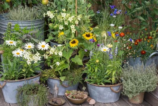 wpid19264-A-Cottage-Garden-in-Pots-DECK072-nicola-stocken.jpg