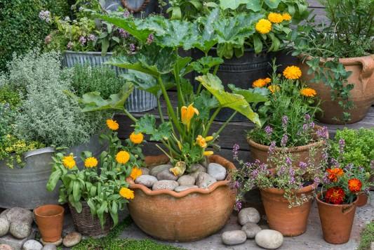 wpid19270-A-Cottage-Garden-in-Pots-DECK089-nicola-stocken.jpg