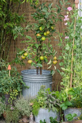 wpid19274-A-Cottage-Garden-in-Pots-DECK093-nicola-stocken.jpg