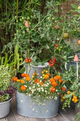 wpid19280-A-Cottage-Garden-in-Pots-DECK101-nicola-stocken.jpg