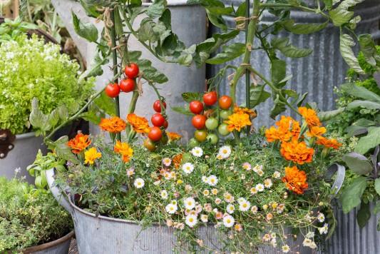 wpid19282-A-Cottage-Garden-in-Pots-DECK102-nicola-stocken.jpg