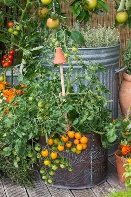 wpid19288-A-Cottage-Garden-in-Pots-DECK106-nicola-stocken.jpg