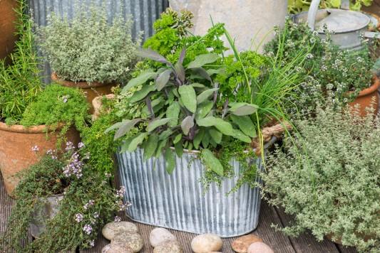 wpid19292-A-Cottage-Garden-in-Pots-DECK124-nicola-stocken.jpg