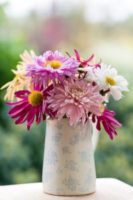 wpid19500-Hardy-Chrysanthemums-in-Autumn-GNOW074-nicola-stocken.jpg