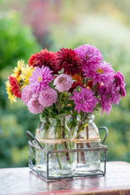 wpid19502-Hardy-Chrysanthemums-in-Autumn-GNOW075-nicola-stocken.jpg