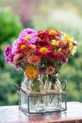wpid19504-Hardy-Chrysanthemums-in-Autumn-GNOW076-nicola-stocken.jpg