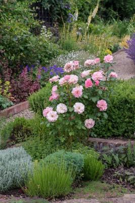 wpid19528-Village-Garden-in-June-GORH018-nicola-stocken.jpg
