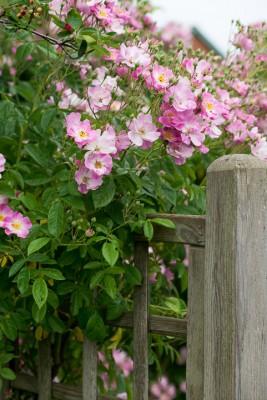 wpid19534-Village-Garden-in-June-GORH024-nicola-stocken.jpg