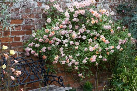 wpid19542-Village-Garden-in-June-GORH036-nicola-stocken.jpg