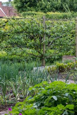 wpid19548-Village-Garden-in-June-GORH041-nicola-stocken.jpg