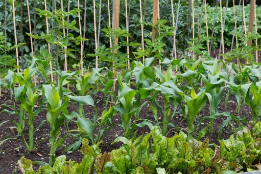 wpid19552-Village-Garden-in-June-GORH047-nicola-stocken.jpg