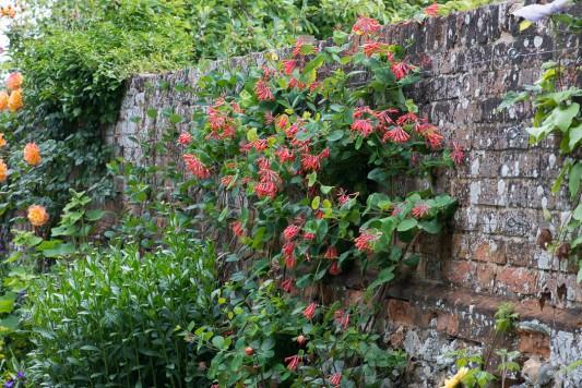 wpid19554-Village-Garden-in-June-GORH050-nicola-stocken.jpg